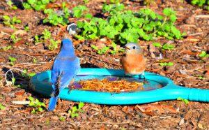 self storage blue bird